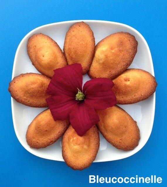 fleur de madeleines