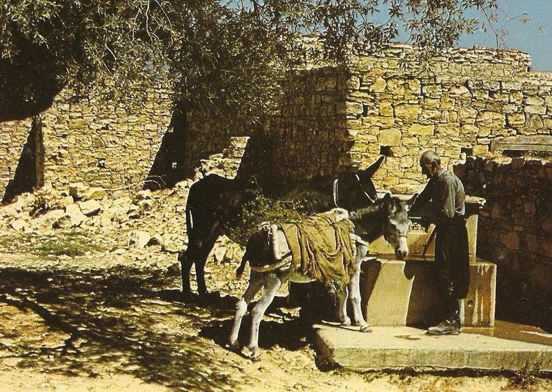 Un âne à Chypre - 6