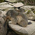 05 Les Marmottes (11)