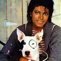 michael-and-his-animals-michael-jackson-31096844-2064-2560