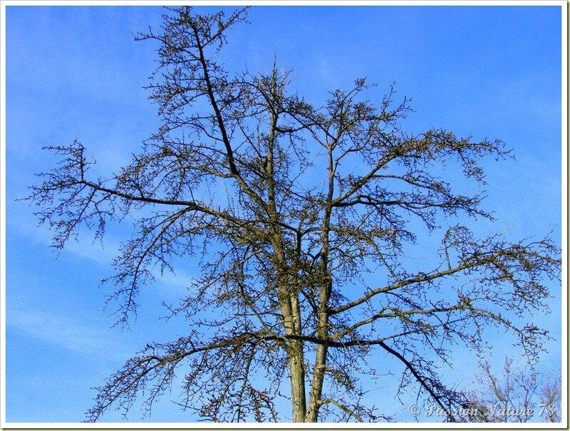 La forêt de Rambouillet vue sous un autre angle (11)