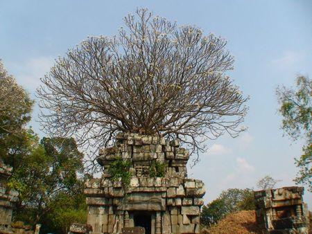 temple phnom bok_frangipanier_04