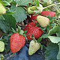 L'enfer à fraisi-paradis...