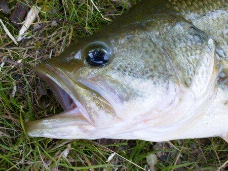 poissons_025