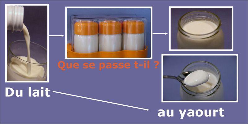 Reussir son yaourt que se passe du lait au yaourt - Yaourt maison lait de chevre ...