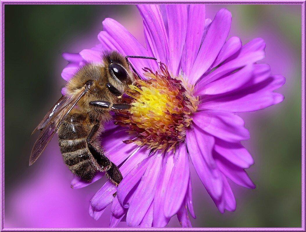 fleurs et abeilles kassiopee. Black Bedroom Furniture Sets. Home Design Ideas