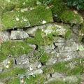 Vieux mur moussu