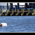 2008-07-13 - Annapolis 001
