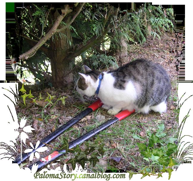 débroussaillage au jardin