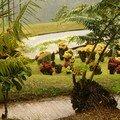 Jardin de balata (7)