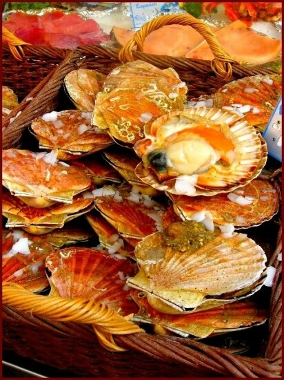 coquilles-saint-jacques-france-1348509071-1149441[1]