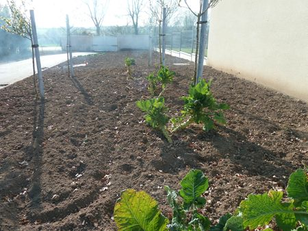 potager dbut avril (4)