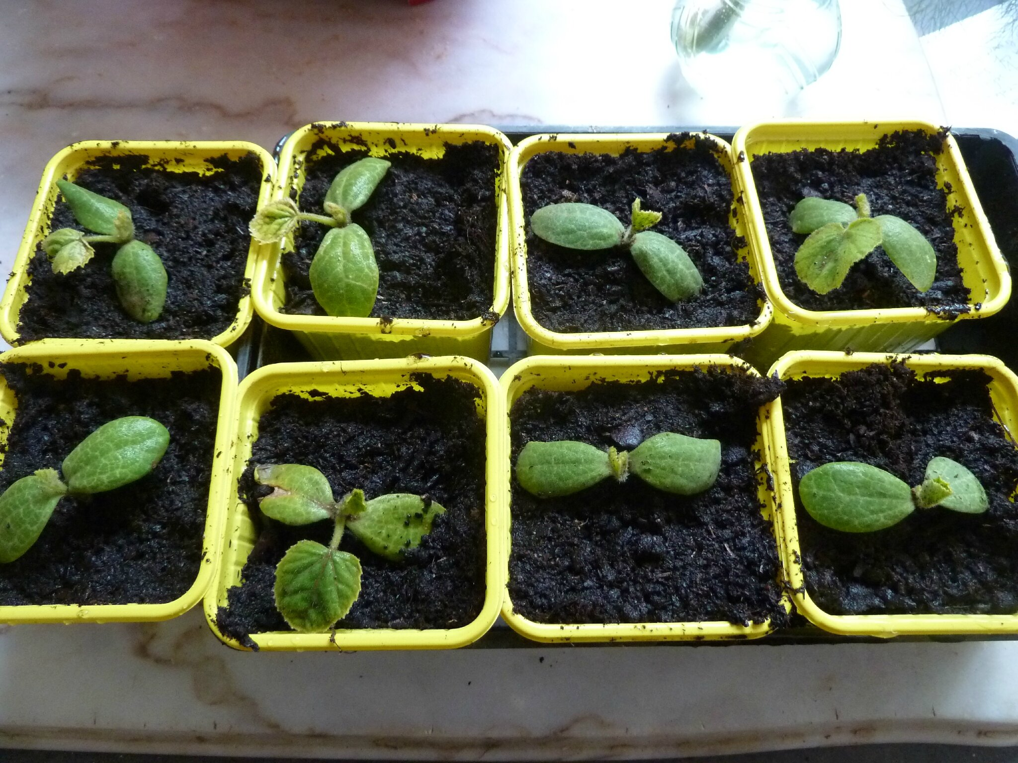Juin l 39 t n 39 est pas loin passion potager - Quand planter les courgettes ...