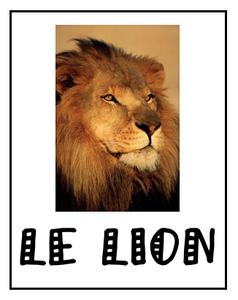 Le lion roi des animaux le blogulis de cluny - Animaux du roi lion ...