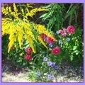 Fleurs de village Baume-les-Messieurs Jura