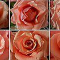 Windows-Live-Writer/cc37ec99af6b_FD24/coeurs de roses_2