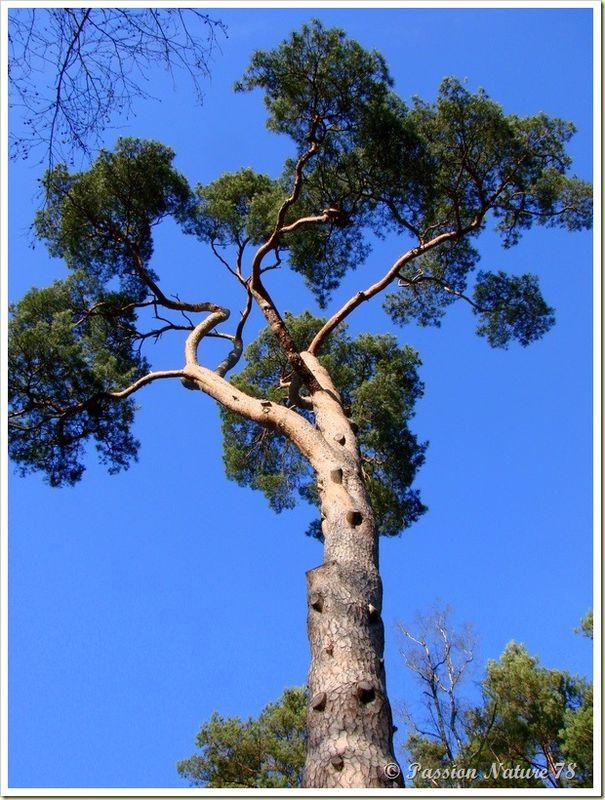 La forêt de Rambouillet vue sous un autre angle (20)