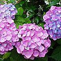 Fleurs de Leon 24061615