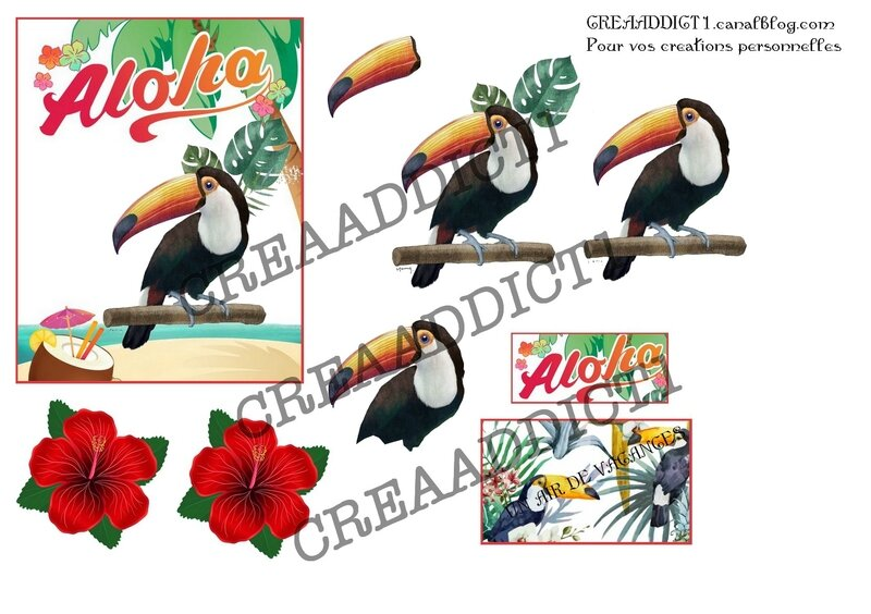 Copie de planche toucan