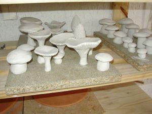champignons au sechage 2