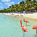 ARUBA FLAMAND ROSE