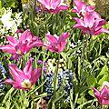 tulipes_careme-3