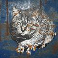 Fétiche ...le chat