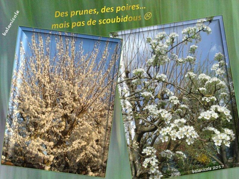 balanicole_2017_04_coup de gel sur le printemps des vivaces_27_prunes et poires