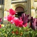 fleurs_avril-a (20)