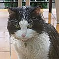 tigrou chat d'émilie