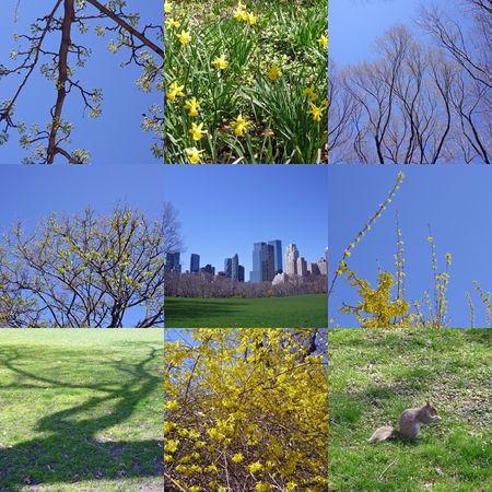 printemps___Central_Park