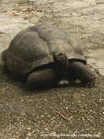 3_Tortue
