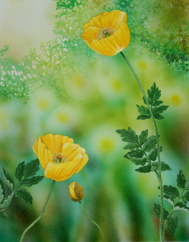 Flore des Pyrénées 59 bis