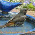 Des oiseaux discrets et des fleurs au jardin