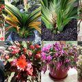 Floralies de cactus pour mamie stéphanie