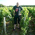 Dans les vignes médocaines