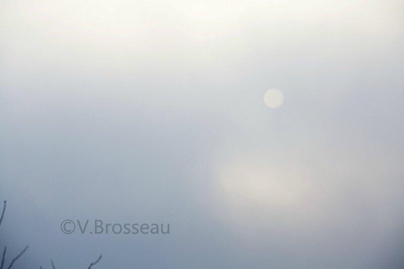 soleil-brume15-01