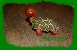 tortue_020