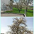 Les arbres se couvrent de fleurs