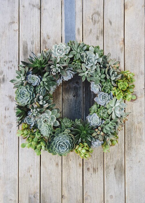 diy couronne de plantes succulentes grasses pom gus. Black Bedroom Furniture Sets. Home Design Ideas