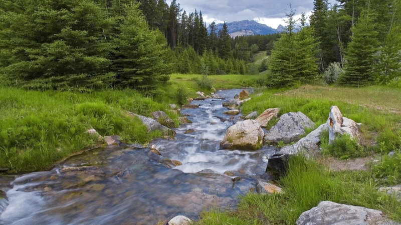 river-flowing-in-between-the-forest