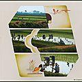 Les rizières de mandaley