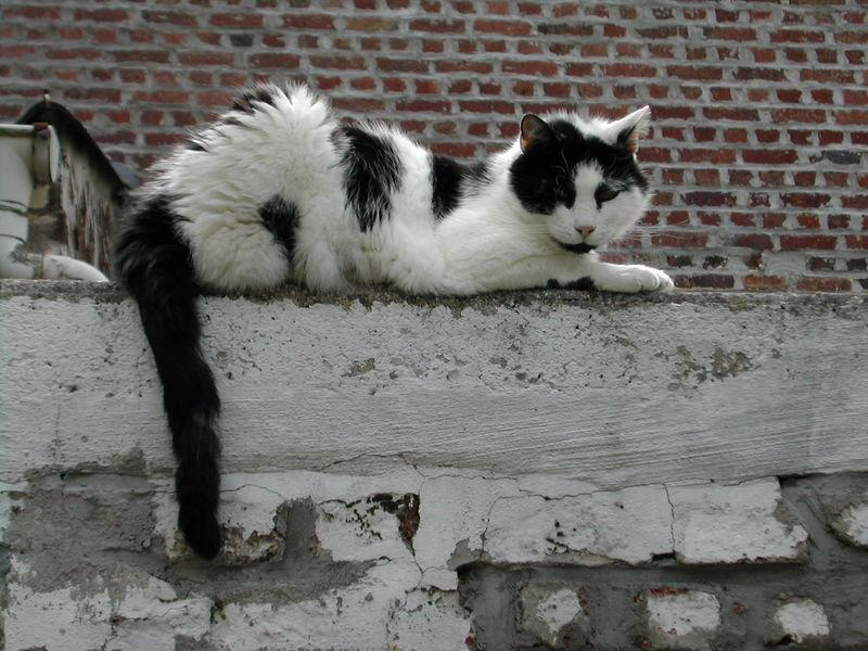 Domino sur son perchoir
