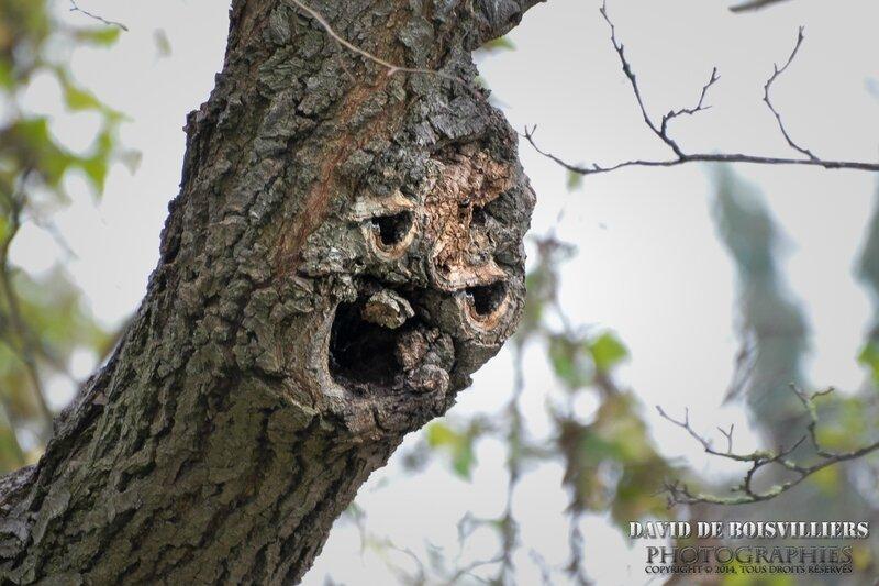 L'arbre farceur