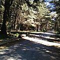 R17-04-luberon / forêt des cédres