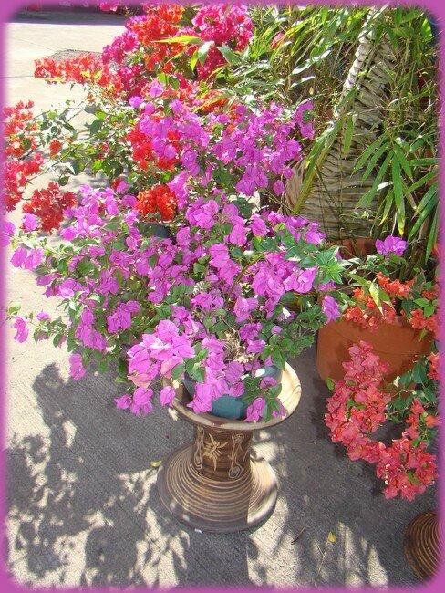 blog_fleursroses