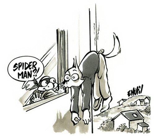 Araignée au plafond 10