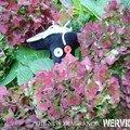 E2-Phytothérapie de Lord Wervicq of Blackpuppet (janvier 2007)