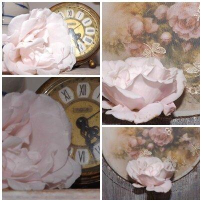 Roses pour Katia (10)
