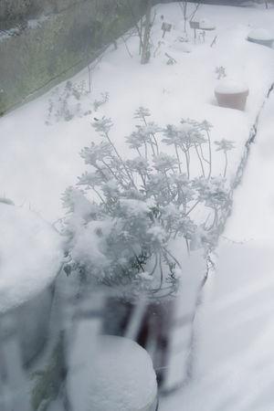 neige_04